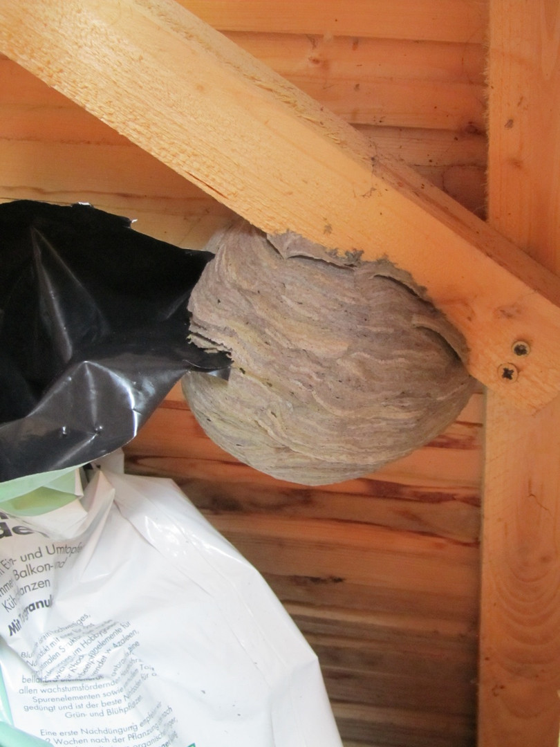 wespennest aus schuppen beseitigt freiwillige feuerwehr. Black Bedroom Furniture Sets. Home Design Ideas